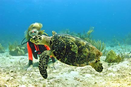 Diving in the US Virgin Islands PADI