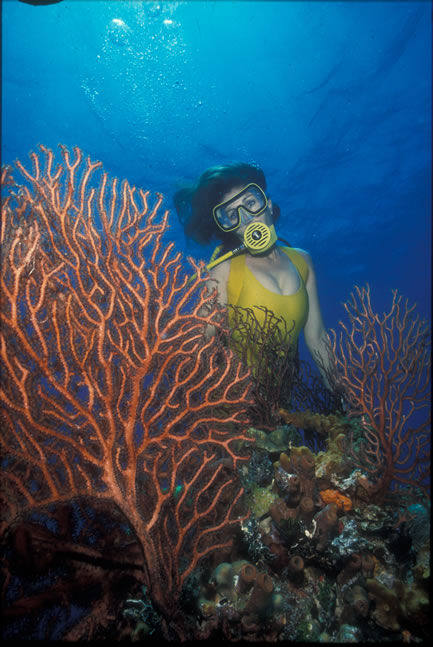 Caribbean BVI All-Inclusive Liveaboard Scuba Diving Vacation