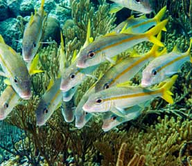 Little St James Reef Dive Site St John US Virgin Islands